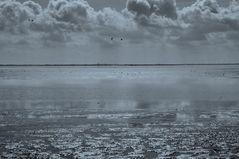 the Dutch Wadden shallows II