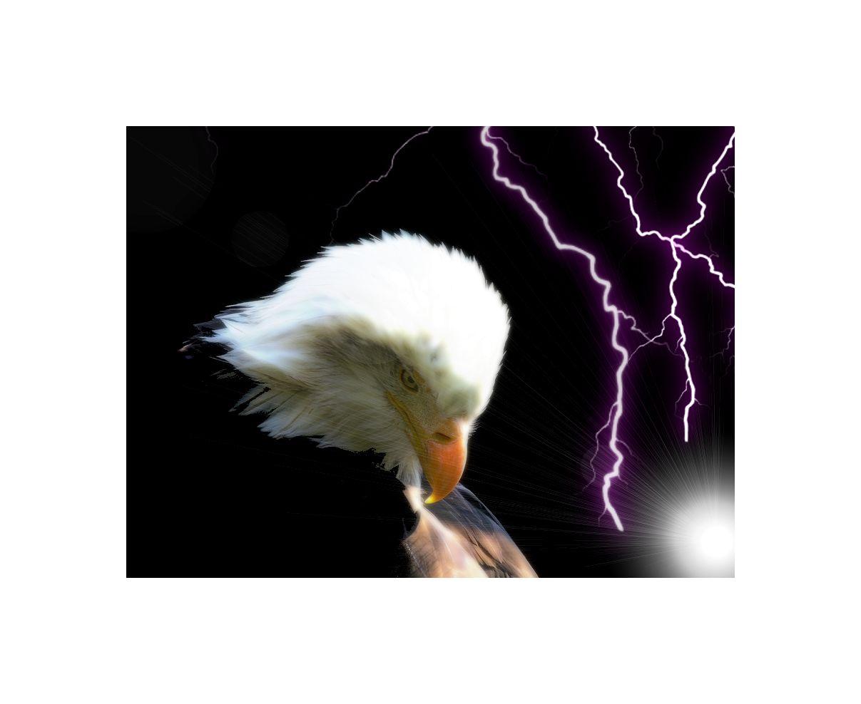 the eagle...