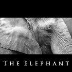 ... the elephant ...