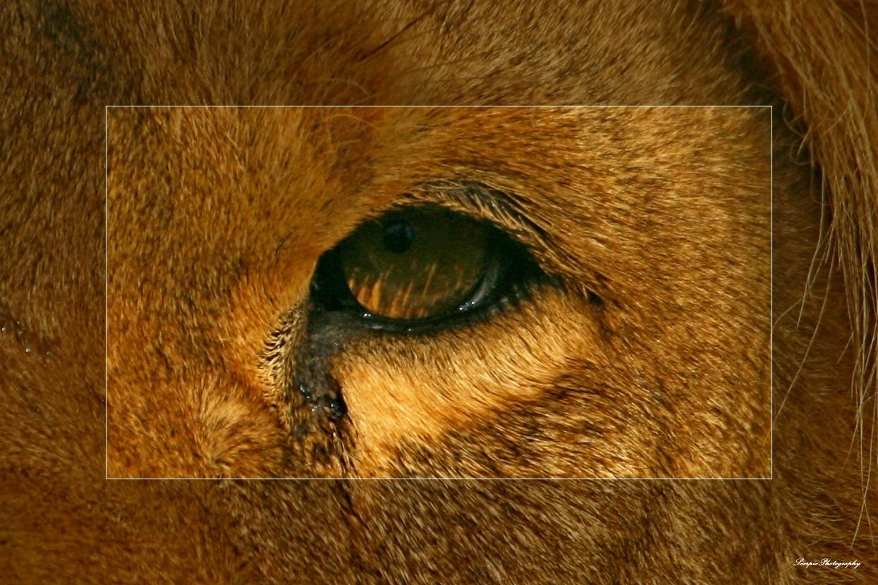 the eye of the killer