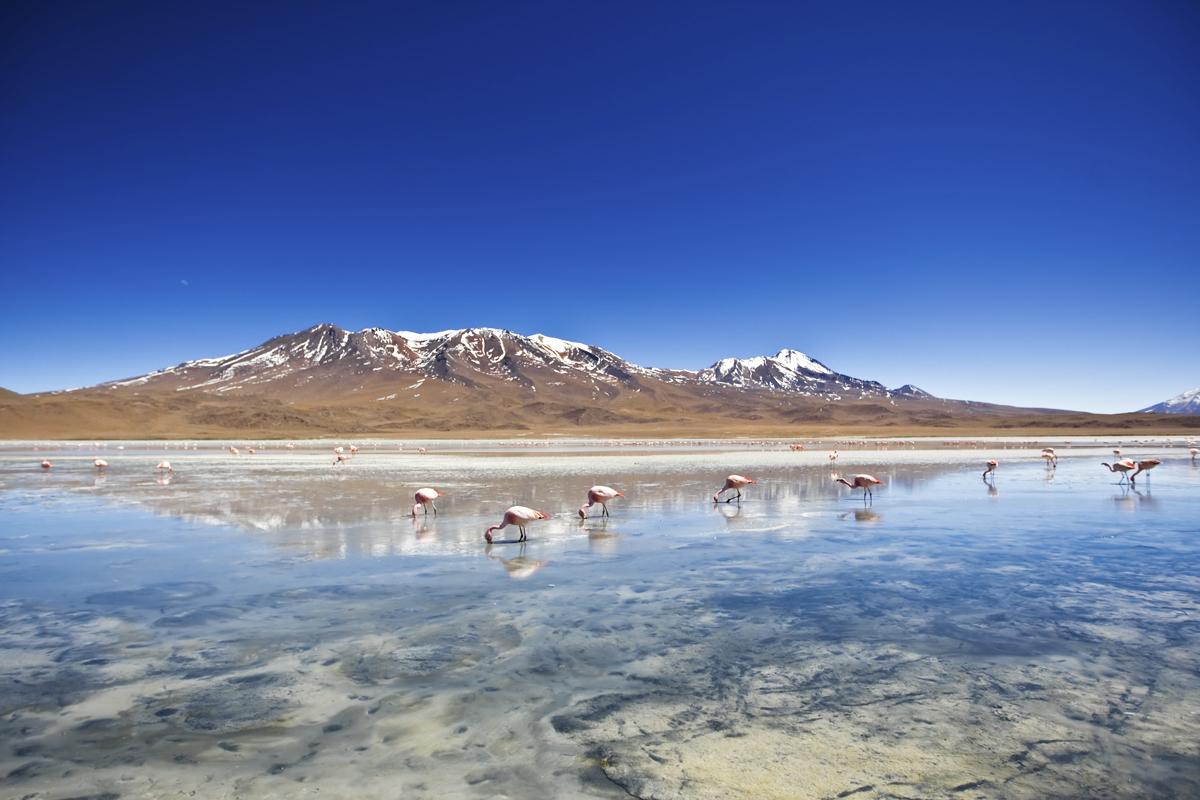The Flamingo Lagoon