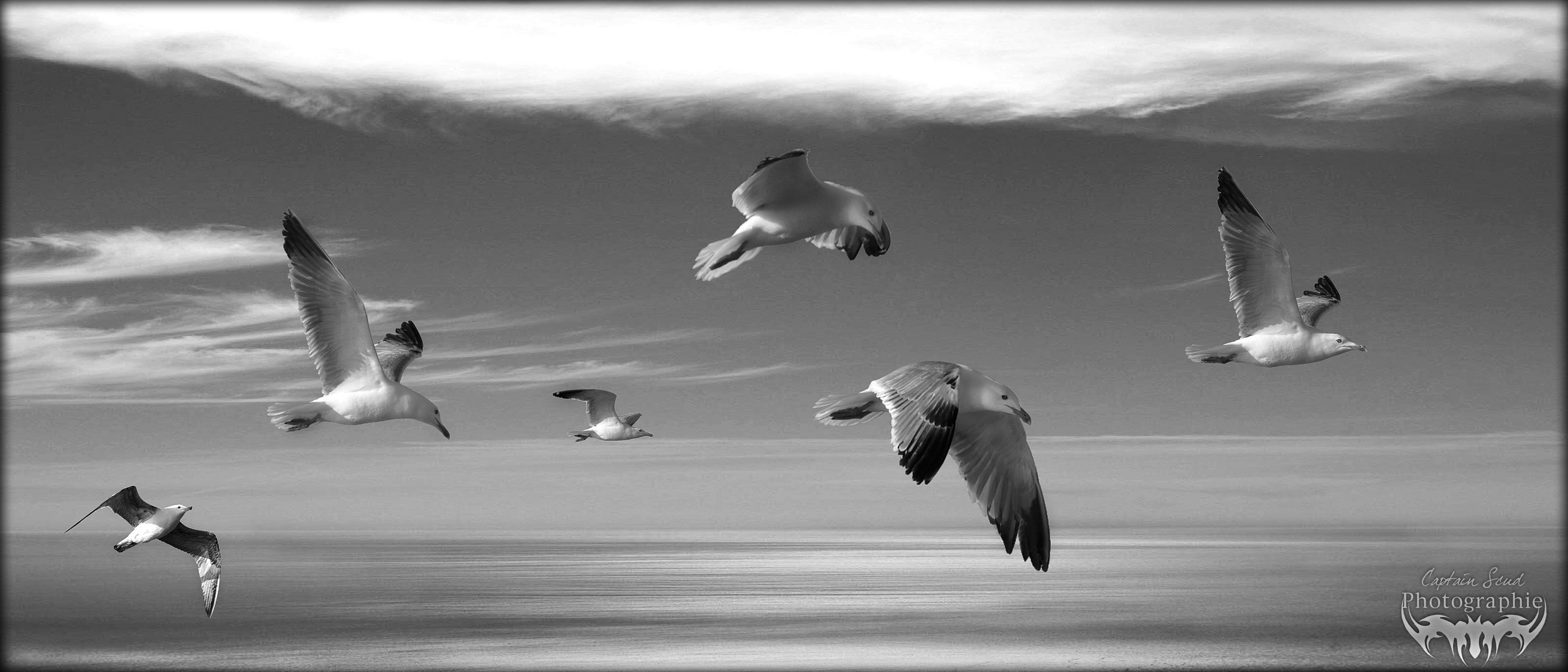 The flight of freedom