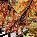 The Floating Bridge  (3)