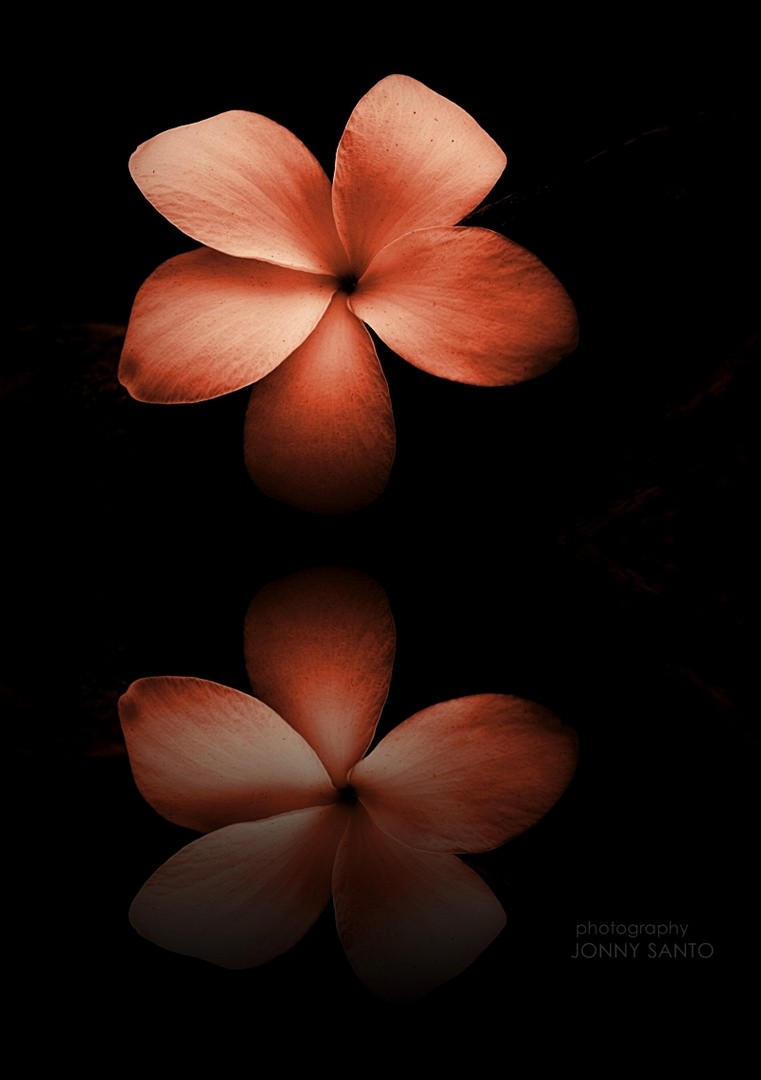 The Flower Reflection