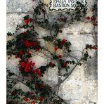 The flowers of Mdina