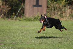 The flying dog :-))