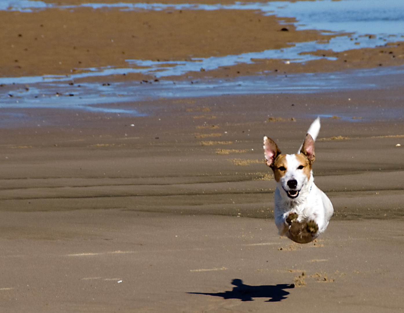 The Flying dog, the strange case of the dog who jumped over his shadow
