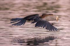 The Flying Fish II
