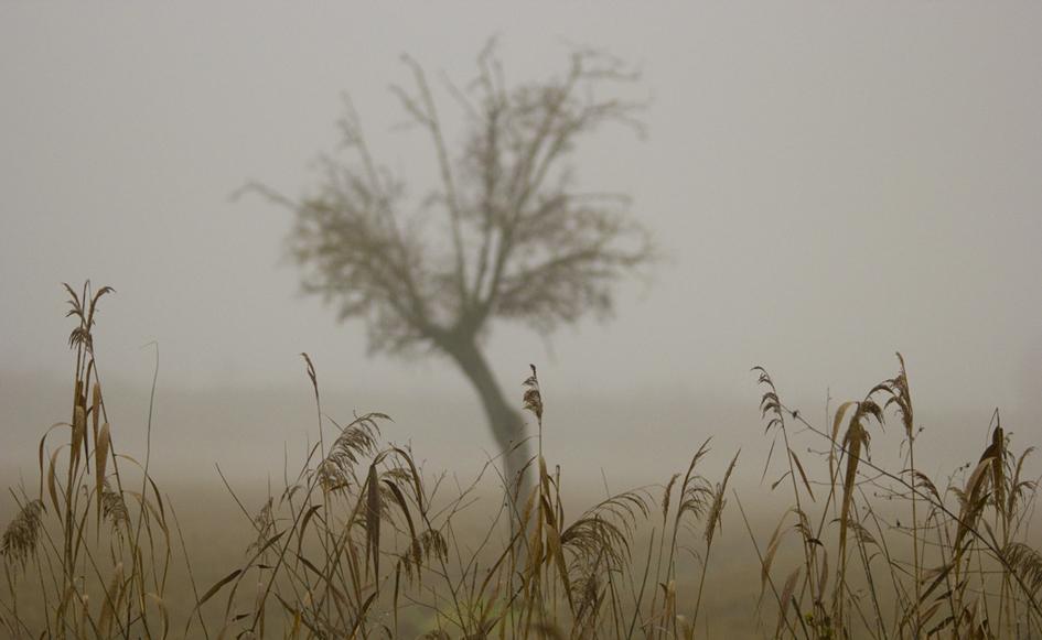 The fog inside