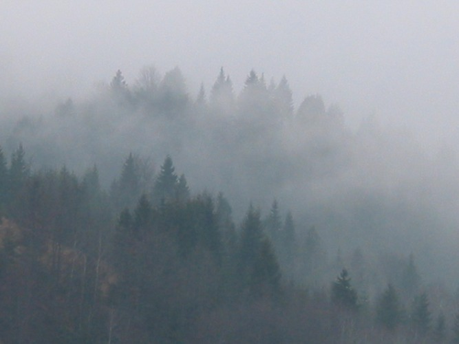 The Fog, Mt. Tara, Serbia