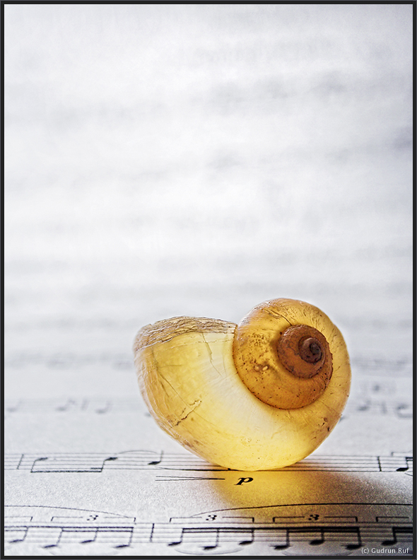 the frenchhorn solo