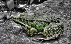 ::: The Frog :::