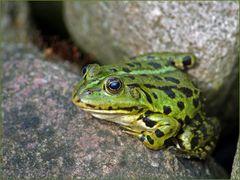 the Frog........Frosch des Grauens....