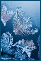 the frozen fish in the coral sea