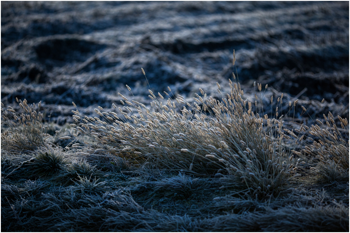 The frozen morning.