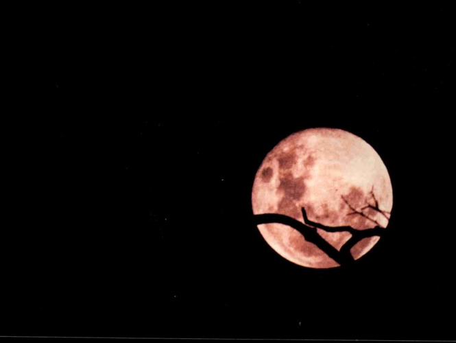 The full moon, the dead tree and the night watcher!
