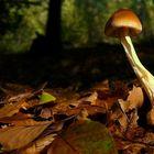 The Fungi world (142) : Tawny Grisette