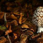 The Fungi World (175) : Magpie Inkcap