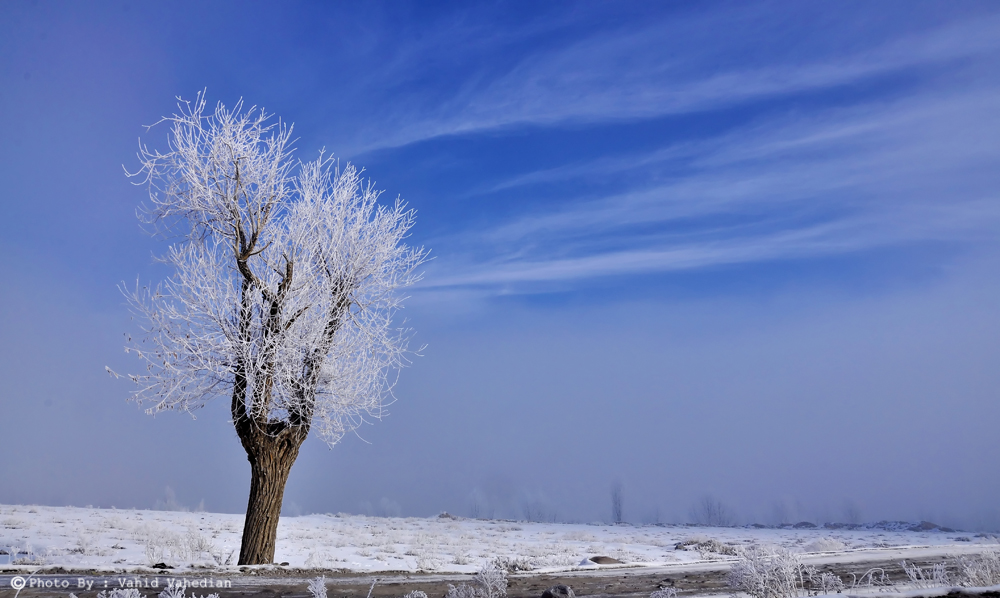 The glory of winter