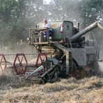 the grain harvest with a claas matador.