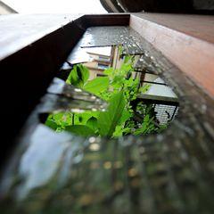 """the """"Green Door"""""""