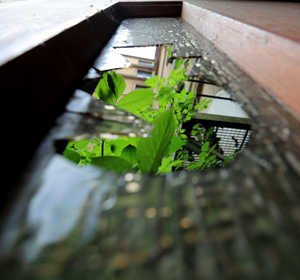 the-green-door  (square)