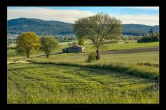 The Green Grass of Home
