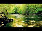 ~ The Green Marsh ~