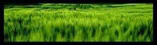 The Green Mile von Melomanie