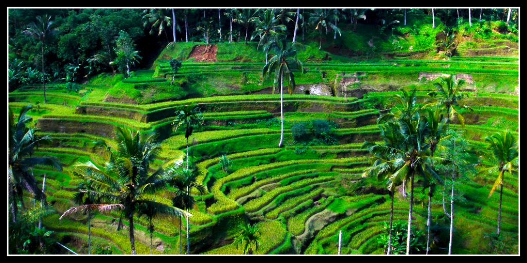 The Green of Bali