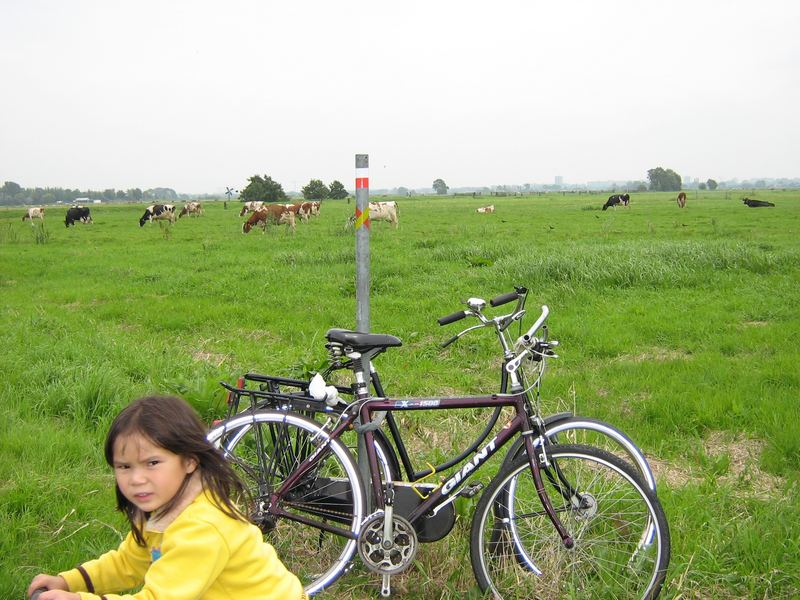 The Greeniest pasture