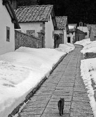 The hermit's cat