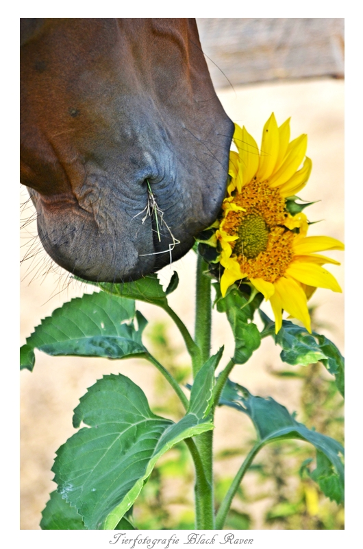 The Horse and the Flower