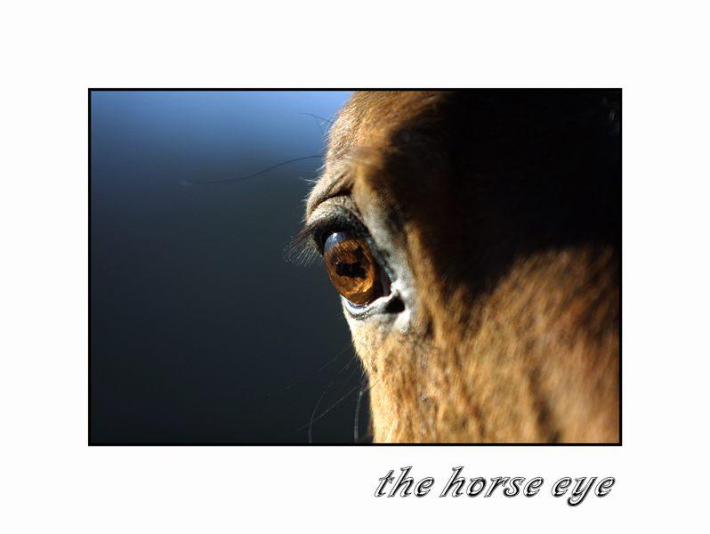 ~~~the horse eye~~~
