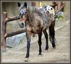 """The horse I."""