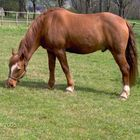 The horse of the cousin of my girlfriend