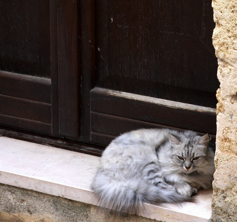 the house cat