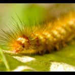 the hungry caterpillar II