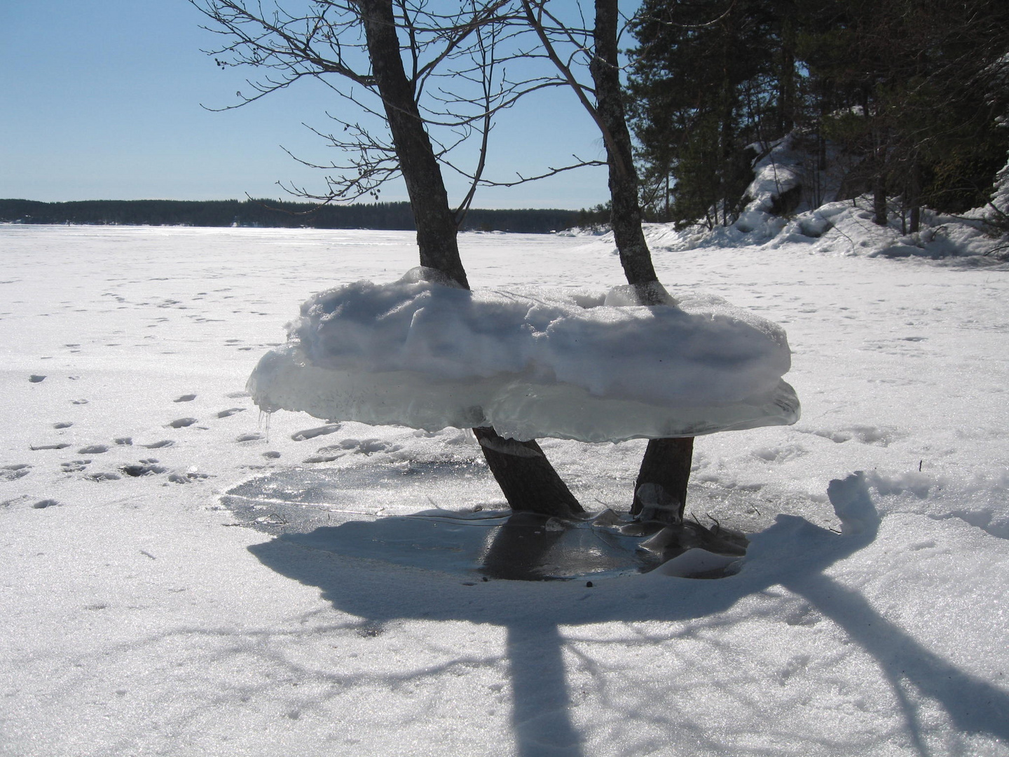 The ice covered tree