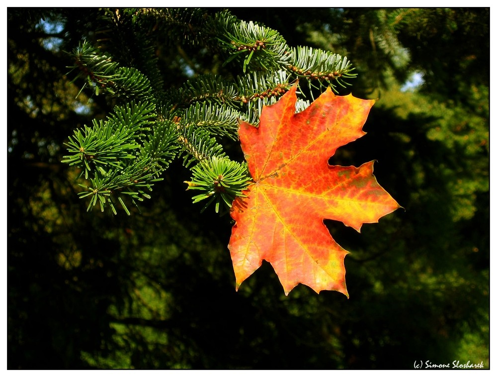 ~ The Journey of a Leaf - Part Two ~