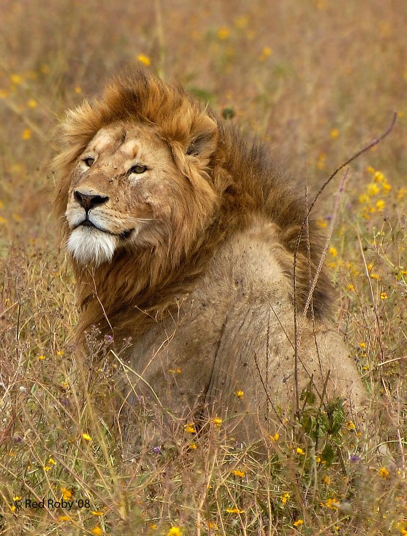 The King (Tanzania)