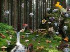 The Land of Mystic Fungi