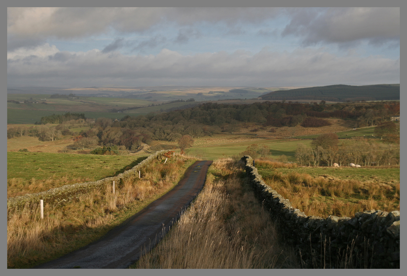 the lane from Ridsdale to chesterhope