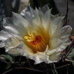 the last flower...