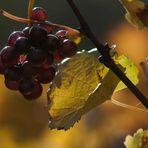 The last highlight of autumn (2)