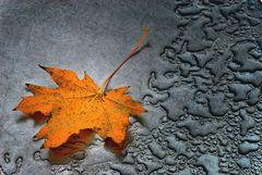 ... the last leaf ...