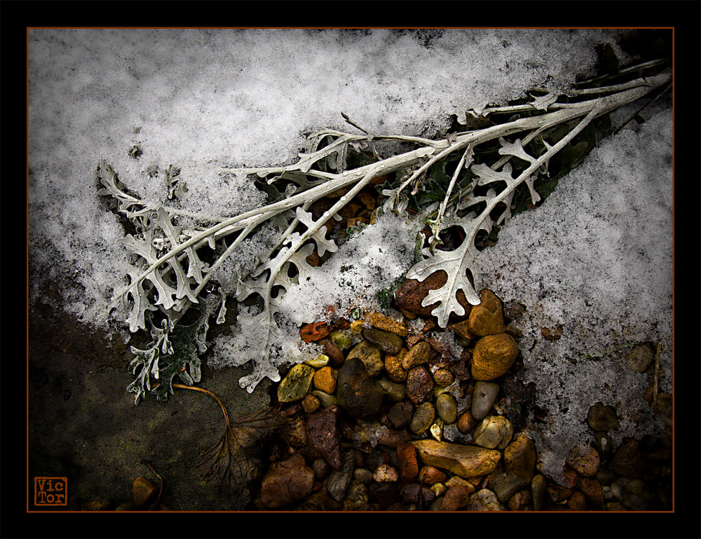 The last of the melting snow
