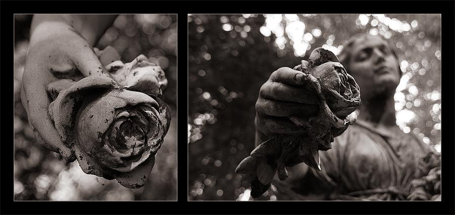 [the last rose]