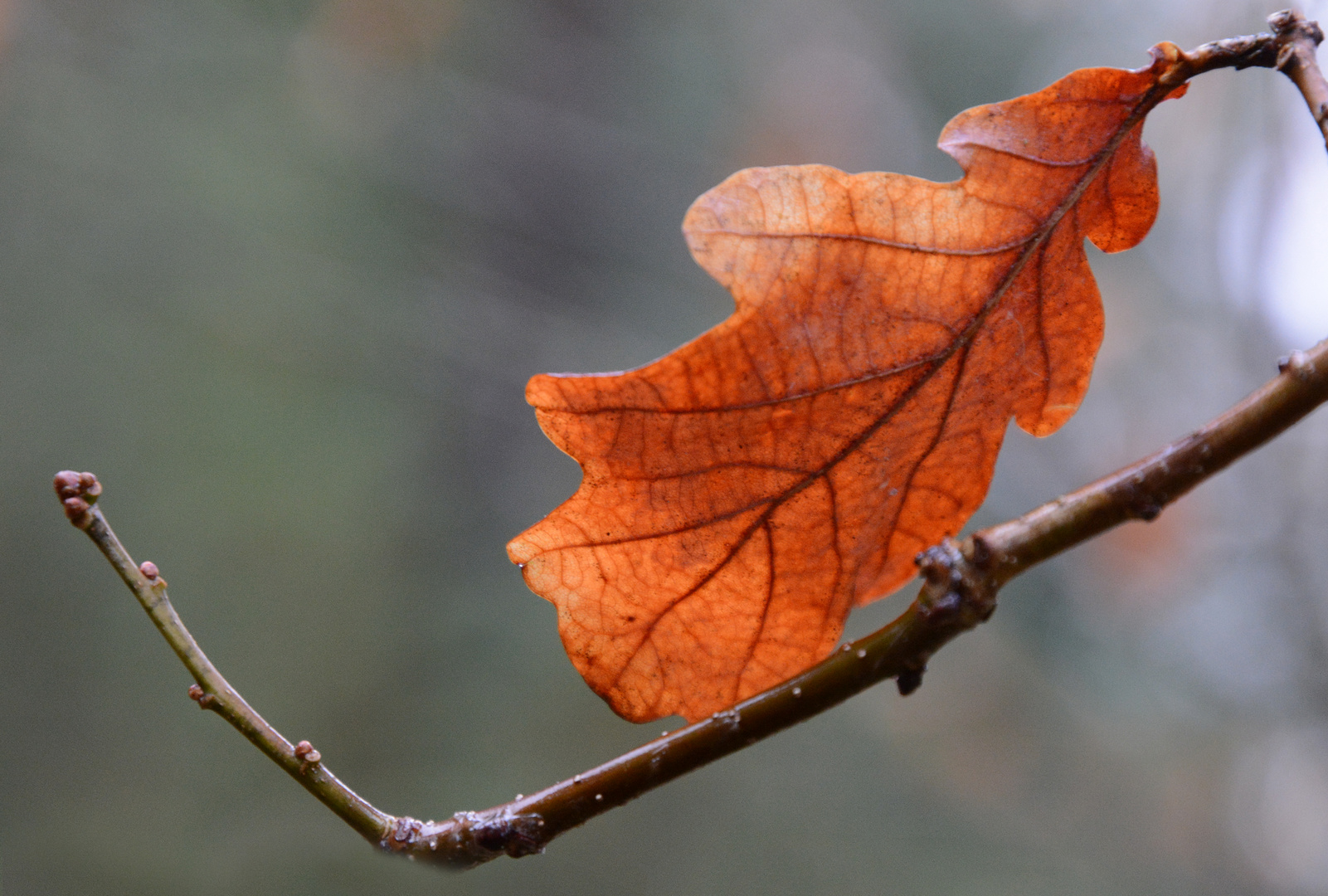 The leaf against the light