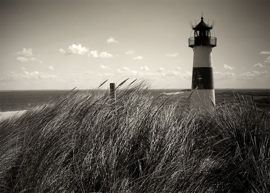 [the lighthouse]